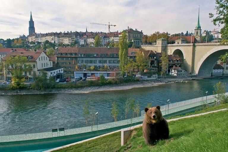 Parque de los osos en Berna